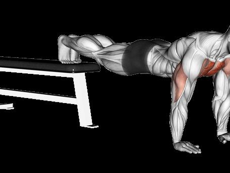 Push-up Exercises