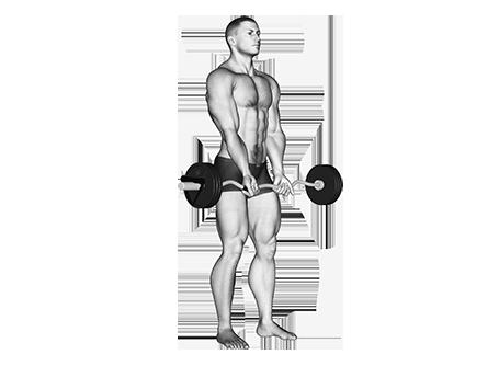E-Z-Curl-Bar Exercises